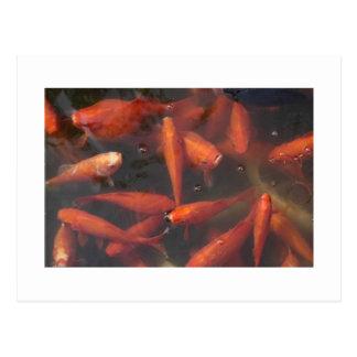 Fish! Postcard