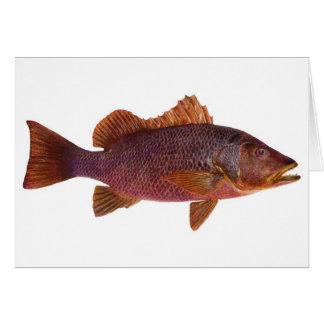 Fish - Purple Sea Perch - Lutjanus superbus Greeting Card
