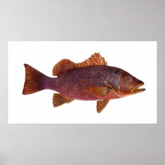 Fish - Purple Sea Perch - Lutjanus superbus Print