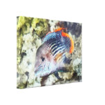Fish - Rainbowfish Gallery Wrapped Canvas