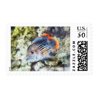 Fish - Rainbowfish Postage
