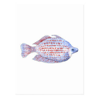 Fish. Red Line Rainbowfish. Post Cards