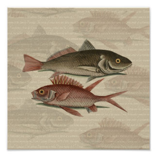 fish red perch Vintage fisherman gift Print