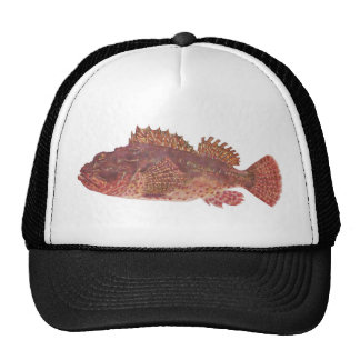 Fish - Red Rock Cod - Scorpaena cardinalis Mesh Hat