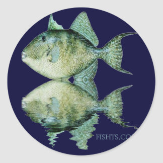 Fish Reflections by FishTs Classic Round Sticker