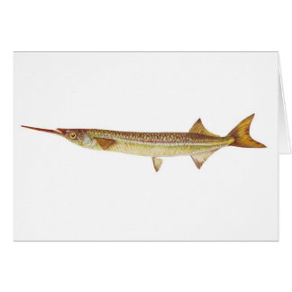 Fish - River Garfish - Hyporhamphus regularis Card