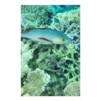 Fish roaming the reef stationery