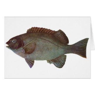 Fish - Rock Blackfish - Girella elevata Card