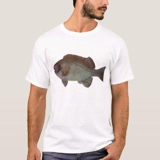 Fish - Rock Blackfish - Girella elevata T-Shirt