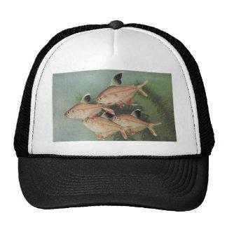 Fish - Rosy Tetra - Hyphessobrycon rosaceus Trucker Hat