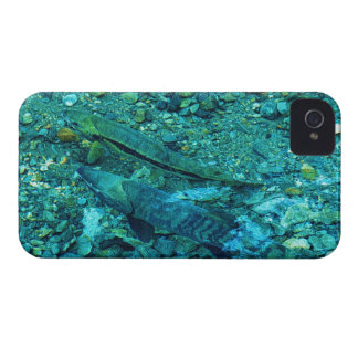 Fish Salmon Spawn Wildlife Photo Blackberry Case