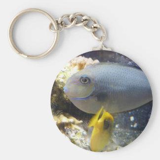 fish,salt water keychain