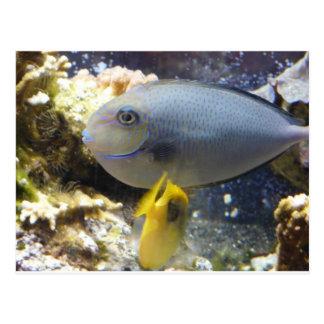 fish,salt water postcard