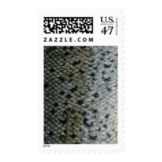 Fish Scales 2 Postage