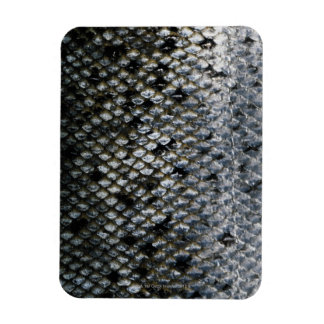Fish Scales Magnet