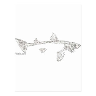Fish Skeletons Collection Postcard