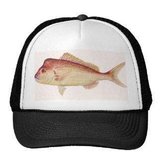 Fish - Snapper - Chrysophrys guttulatus Trucker Hat