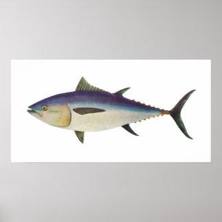 Fish - Southern Bluefin Tuna - Thunnus maccoyii Poster