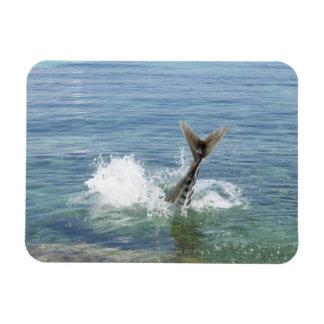 Fish splashing in the sea rectangular photo magnet