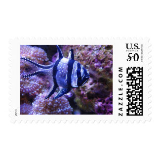fish,striped fish postage