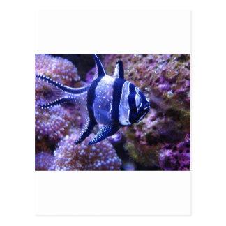 fish,striped fish postcard