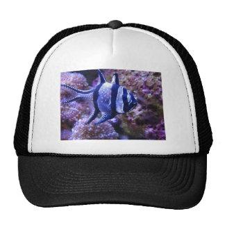 fish,striped fish trucker hat