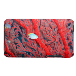 Fish swimming in coral barely there iPod case
