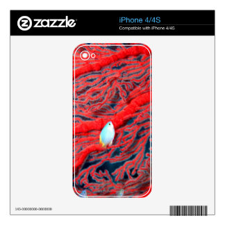 Fish swimming in coral decals for the iPhone 4S