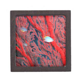 Fish swimming in coral keepsake box