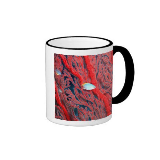 Fish swimming in coral mug