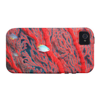 Fish swimming in coral vibe iPhone 4 covers