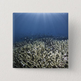 Fish swimming over dead reef button