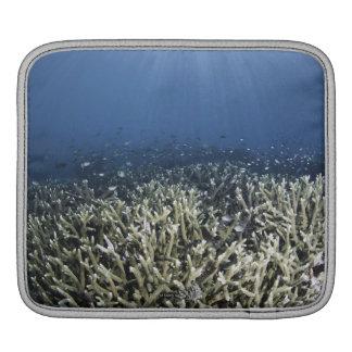 Fish swimming over dead reef iPad sleeves