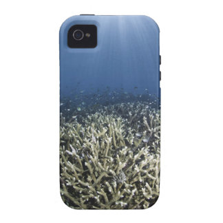 Fish swimming over dead reef iPhone 4/4S cover