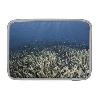 Fish swimming over dead reef MacBook sleeve