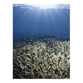 Fish swimming over dead reef postcard