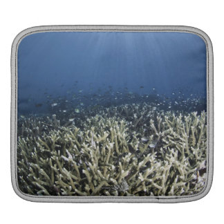 Fish swimming over dead reef sleeve for iPads