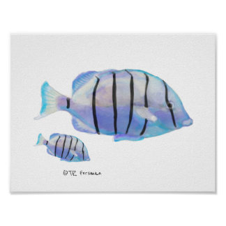 Fish Swimming painting Poster