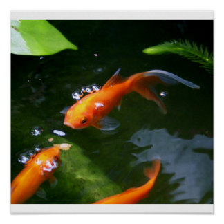 FISH TALES www debbie-may fineartamerica com Posters