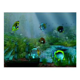 Fish Tank Aquraium Art Postcard