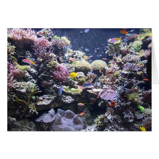 Fish Tank Card