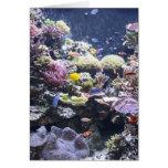 Fish Tank Cards