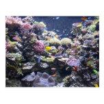 Fish Tank Post Card