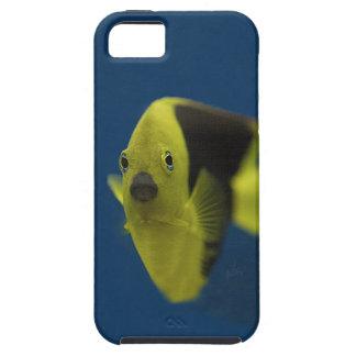 fish tank series 9 iPhone 5 case