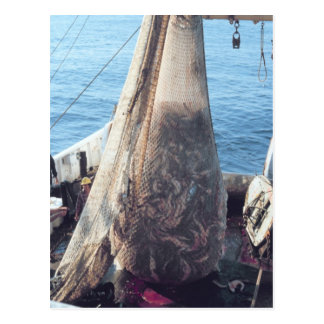 Fish Trawling Net Postcard