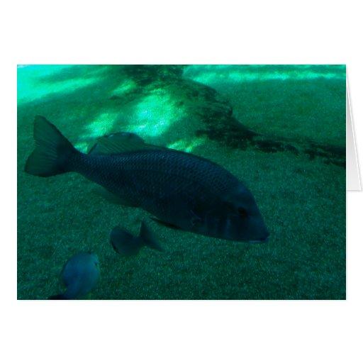 Fish Underwater Card