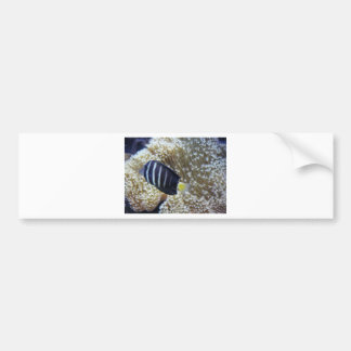 fish with anemone car bumper sticker