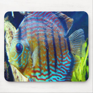 Fish with big blue eyes & blue stripes, swimming o mouse pad