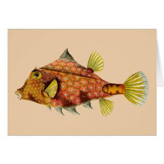 fish wrap greeting card