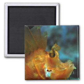 fisher 2 inch square magnet